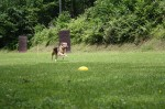 Obedience-Seminar mit Gerlinde Dobler am 06.07.2014