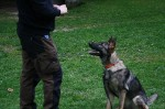 Obedience-Training am 10.04.2014